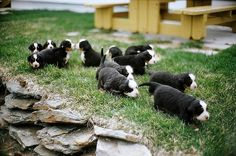 dogs # by louisclub, via Flickr