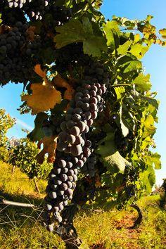 Chile, Santa Cruz, Valle Colchagua, Viña MontGras Chile, Fine Wine, Wines, Beautiful Places, Unique, Photography, Travel, Art, Santa Cruz