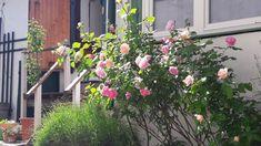 Farmhouse, Garden, Plants, Rural House, Garten, Flora, Plant, Lawn And Garden, Cottages