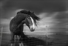 Shire horse... gorgeous effect!