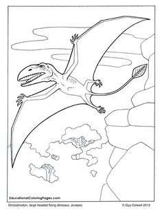 Dimorphodon coloring, flying dinosaur coloring pages