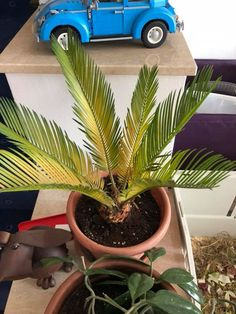 House Plant Care, Tropical Houses, Entryway Decor, Houseplants, Gardening Tips, Diy Home Decor, Easy Diy, Make It Yourself, Simple