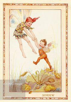 'Sundew Fairies' - Illustration from the book 'The Heath Fairies'. Margaret Tarrant