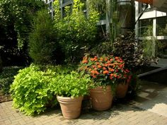 SunPatiens Compact Orange mixes well with other containers.