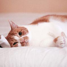 • G o o d • n i g h t ♡ • Audrey Leroy's Instagram: https://instagram.com/p/y714T5jb5M/?modal=true #instagram #cookie_cat #cat