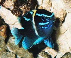 los mejores peces para acuario - Buscar con Google