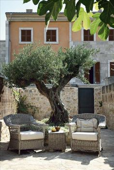 stone courtyard with big awesome tree