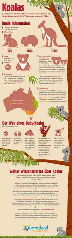 Alles über #Koalas