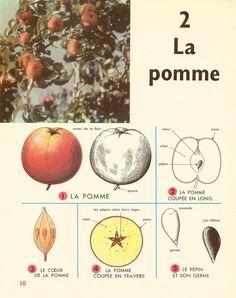 leçons de choses (1964) CE