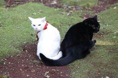 そんな玉之丞が現地に住む黒猫と恋に落ちる!?