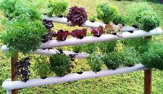 Image result for pipes with plants