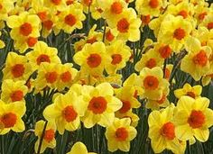 images Spring - Google Search