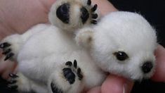 I Thought Animals Couldn't Possibly Get Any Cuter, But Then I Saw These Little Guys #cute #little #animals #baby #wildlife