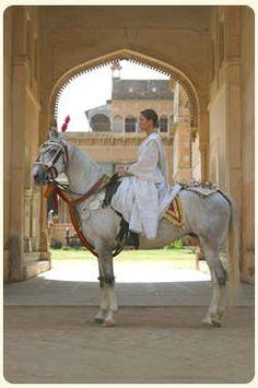 Marwari Horse from Rajasthan, India