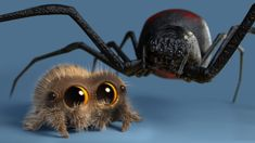 George The Spider Lucas The Spider Tribute Lucas The Spider Lucas Spider