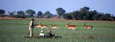 De safari en Mokoro por el delta del Okavango