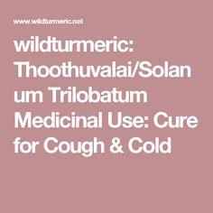 wildturmeric: Thoothuvalai/Solanum Trilobatum Medicinal Use: Cure for Cough & Cold