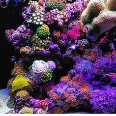 Reef critters of @atlreef #saltwatergardens #reeftank #reefpack #reefrevolution…