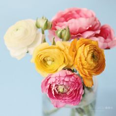 I want these exact flowers in this arrangement tattooed around my baby's breath flowers on my shoulder. Perf. So pretty.