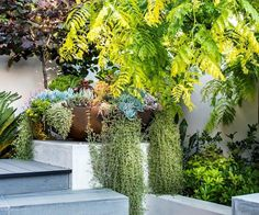 A small yard shouldn't be uninspiring. Learn how to transform what little space you have into an urban oasis by getting on board with vertical gardens, climbing vines and potted feature plants. Back Gardens, Small Gardens, Outdoor Gardens, Greenhouse Growing, Greenhouse Plans, East Facing Garden, Plant Watering System, Back Garden Design, Short Plants