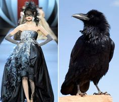 90 Avian-Inspired Fashions - From Ostentatious Ostrich Gowns to Wild Feather Eyebrows (CLUSTER)