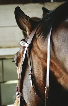 Schuhhefe schoengeist - Art Of Equitation All The Pretty Horses, Beautiful Horses, Animals Beautiful, Animals Amazing, Horse Love, Horse Girl, Majestic Horse, Horse Stables, Horse Bridle