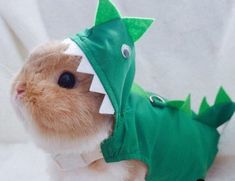 Dinosaur costume for pets, dinosaur harness for small pet, pet costume ,costume for tea cup dog, harness shirt - Kaninchen Baby Animals Super Cute, Cute Baby Bunnies, Cute Little Animals, Cute Funny Animals, Cute Bunny Pictures, Baby Animals Pictures, Cute Animal Pictures, Cute Guinea Pigs, Cute Hamsters