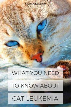 The Feline Leukemia Virus (FeLV) is the number one killer of