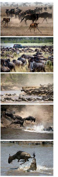 Kenya, the Great Wildebeest Migration.