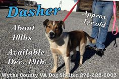 #VIRGINIA #URGENT ~ Dasher  is a 1yo Collie mix in need of a loving #adopter / #rescue at WYTHEVILLE DOG SHELTER 600 Atkins Mill Rd  #Wytheville VA 24382 animalcontrol@wytheco.org Ph 276-228-6003
