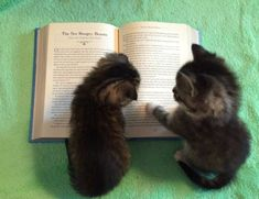 Kittens learning to read