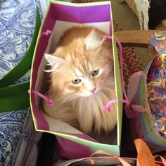 Vladimir in the birthday bag.