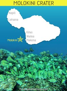 The Best Snorkeling Spots Around Maui Hawaii   Unique Free Maps