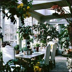 wintergarten pflanzen bedinungen essbereich glas fenster decke ...