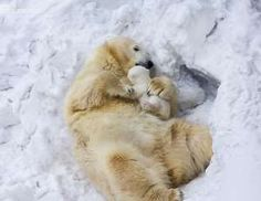 There's no such thing as a hug too big when you're a polar bear.Share This on Facebook?Image via Ant... - Mom.me