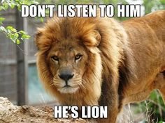 Animal pun - lion/lying pun
