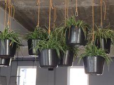 Gaaf ideetje bij Thialf @Arnhem: plastic emmers, dik touw en een lekker tuttig hippe omaplant erin!