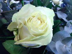 Rosa White Romance www.vandijkbloemen.nl