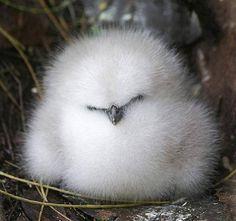 Cute fluffy bird