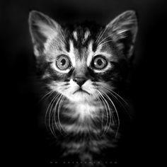 Ok! je voudrais un chat beau comme lui!    - Hairball by http://500px.com/davidh