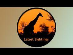 Safari With Us Kruger Park Safari - 4 Day Classic Safari Latest Sightings, Holiday Ideas, Safari, Highlights, Channel, Celestial, Park, Classic, Youtube