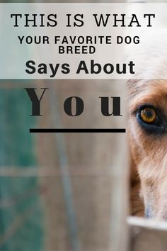 we've come up with a list of some popular dog breeds–so now you can see what your favorite dog breeds says about you! What's your favorite dog breed? Dog Breeds That Dont Shed, Big Dog Breeds, Popular Dog Breeds, Dog Training Methods, Dog Training Techniques, Dog Facts Interesting, Dog Care Tips, Pet Tips, Pet Care