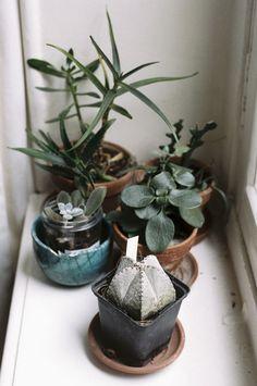 succulents - plants - vegetal - jungle