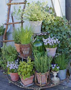 Small Cottage Garden Ideas, Small Garden Design, Garden Cottage, Rustic Landscaping, Garden Landscaping, Landscaping Design, Container Plants, Container Gardening, Small Gardens
