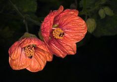 Sobre as flores e a natureza - cores, formas, pormenores e grafismos: Orquídea, Aloé, Protea, Gazânia, Hipericão, Jarro, Abutilão