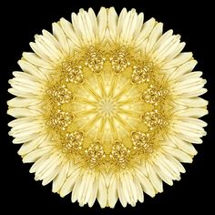 Flower Mandala: Pale-Yellow Daisy - Beliefnet Voices – David J. Flower Mandala, Mandala Art, Mandala Pattern, Pattern Art, Yin Yang, Gerber Daisies, Simple Shapes, Gerbera, Fractal Art