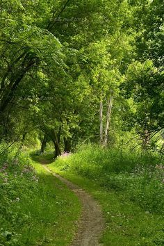 To walk down this green lane, hand in hand, dog by our side..rh