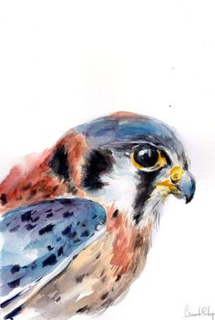 Kestrel, Original Watercolor Painting, Bird Painting, Bird Watercolour Art by CanotStop on Etsy