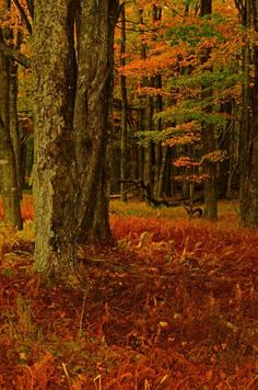 Canaan Valley in West Virginia by Jim Frame Photography