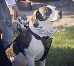 You'll never believe what this pup did at his owner's wedding...